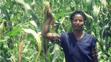 crops farming project