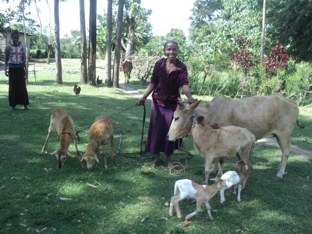 animal husbandry project